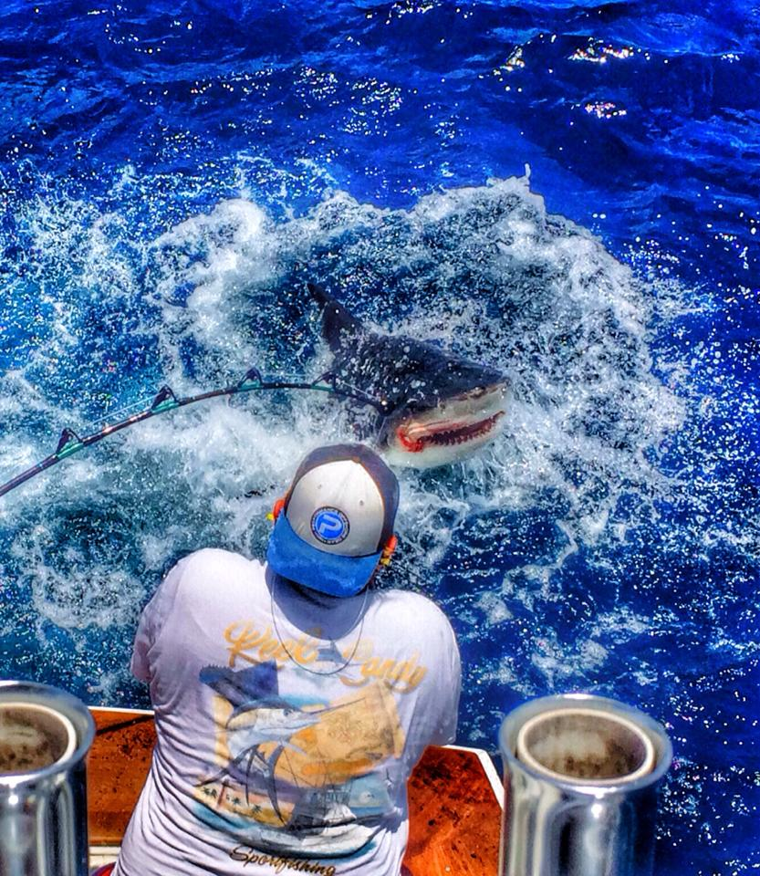 Shark Fishing Jupiter Florida Chris On The Wire